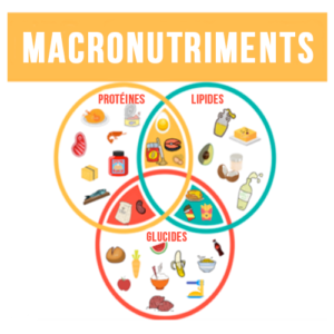 Les macronutriments : c'est quoi ?