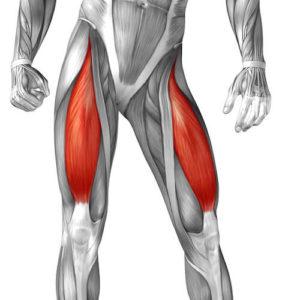 Travailler les quadriceps efficacement