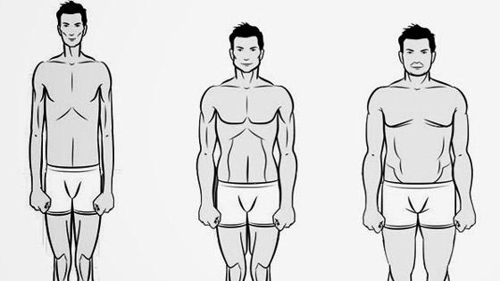 Les  types de morphologies
